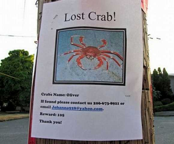 Who Put Up This Poster, Paris Hilton? Seriously, U201cOliveru201d Must Be Some  Special Crustacean If Heu0027s Worth A Sawbuck On The Lost Pet Market.  Lost Pet Poster
