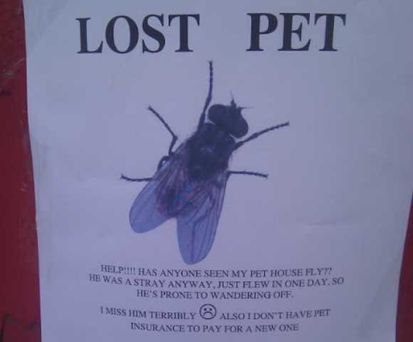 4) Buzz On The Streets  Pet Poster