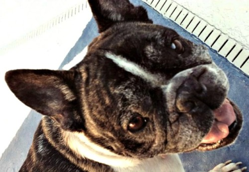 Brachycephalic & Less Active Dogs: Certain breeds need dog nail clippers