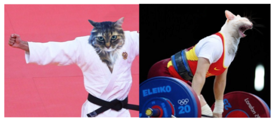 Memo & Cachi - Nicholas Longtin's cats