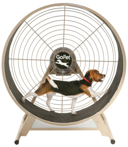 Exercise Wheels For Dogs And Cats Well If A Hamster Can