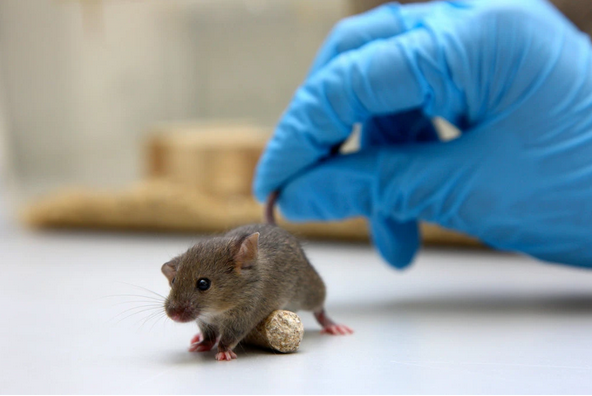 Cure For Coronavirus Tested On Animals Underway