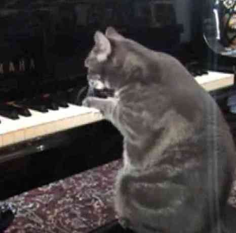 Nora The Piano Playing Cat (You Tuve Image)