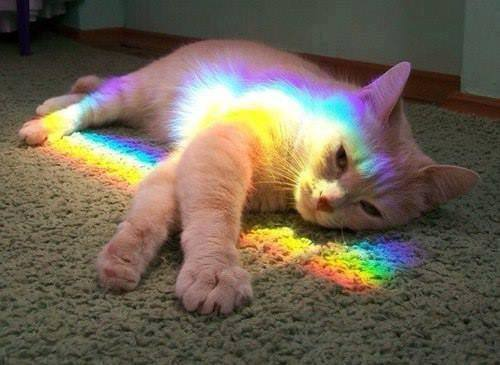 Rainbow Cat (Image via Nyan Cat)