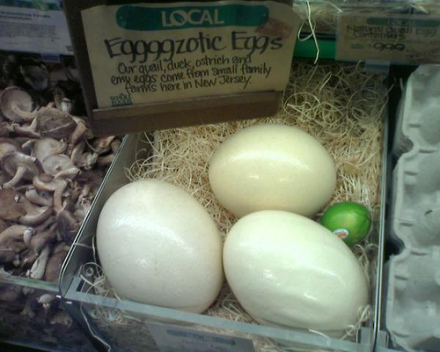 Ostrich eggs: (Photo by cs272 /Creative Commons via Flickr)