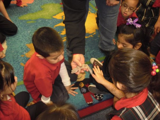 First graders explain to pre-K students at Kansas City school how to care for their pet: image via scuolavitanuovapre-k.blogspot.com