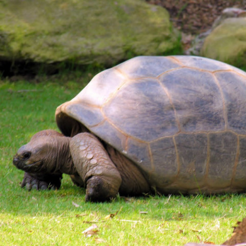 Tortoises & Other Reptiles are Accepted at PHS: Don't just dump unwanted pets