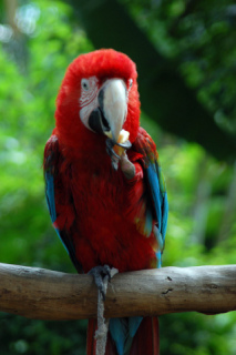 Parrot Eating: Image by Tsuihin, Flickr
