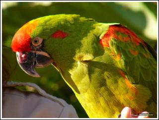 Parrot: Image by ZeHawk, Flickr