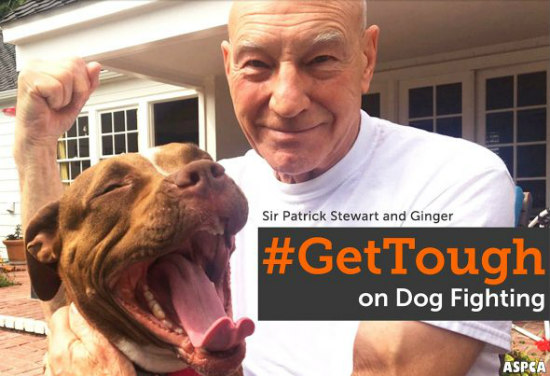 End dog fighting, #gettough
