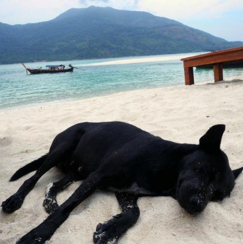 Pet Friendly Travel Locations: Finding Pet Friendly Hotels has gotten easier