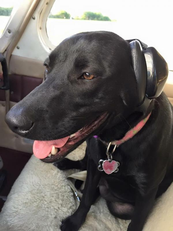 Pilot & Pitbull Co-Pilot Take To The Friendly Skies For Rescues