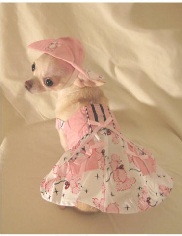 Chihuahua in Poodle Skirt