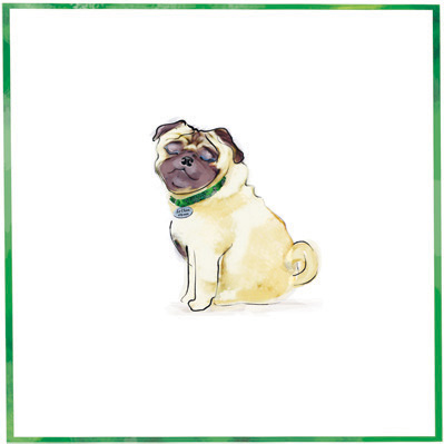 The Pet Set Pug dog breed note card: © The Pet Set