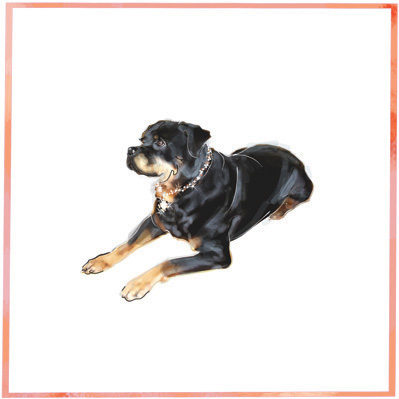 The Pet Set Rottweiler dog breed note card: © The Pet Set