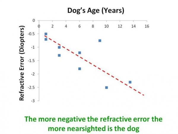 How dogs become more farsighted as they age