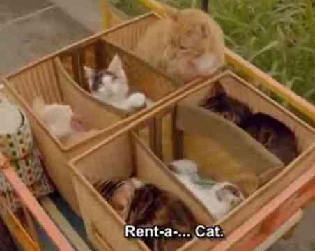 Rent-A-Cat (You Tube Image)