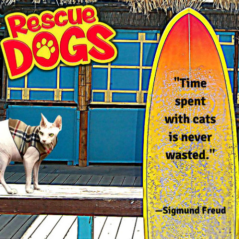 'Rescue Dogs The Movie' Poster: Apollo the rescue cat co-stars in the new film (image via Facebook)