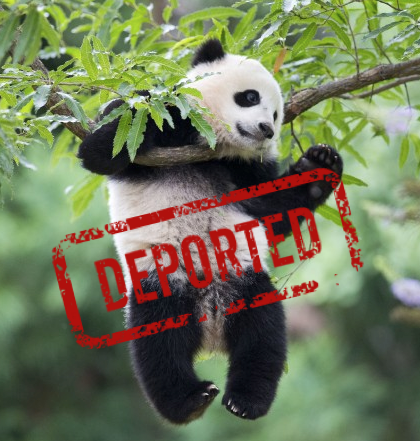 Executive Order To Deport Giant Panda Bao Bao?
