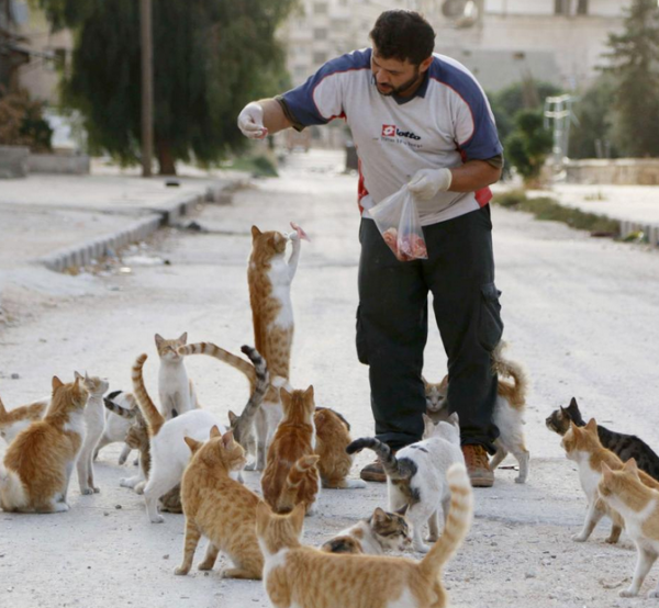 Animals In Syria Can't Escape War-torn Chaos