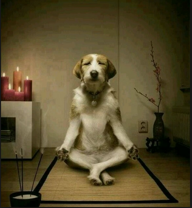 Zen Master Pets Help Master Their Masters