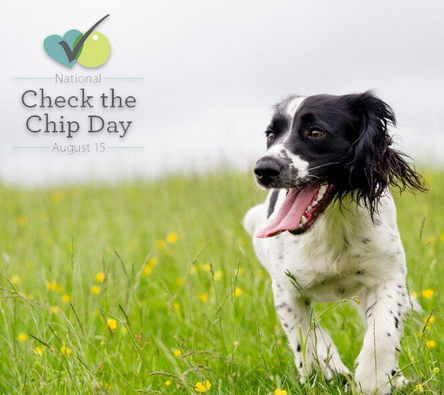 All Chips In For Our Pets On National Check The Chip Day