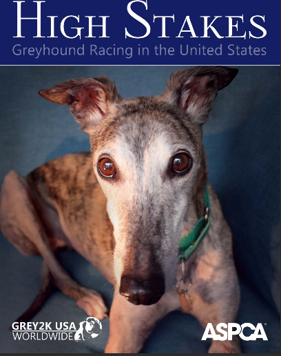 Racing Greyhounds Mistreated By Man & Nature