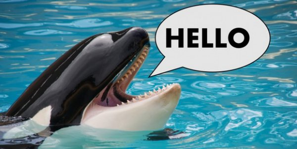 "Killer Whales ""Talking"" A Good Game For First Time"