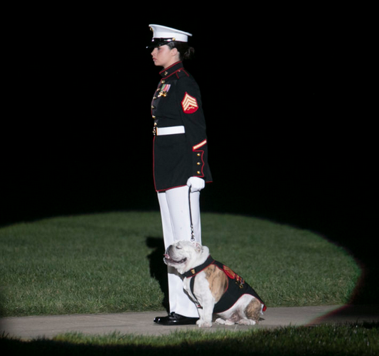 Breaking the Glass Ceiling, Opha May Becomes The Marine's First Female Mascot