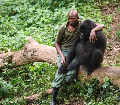 Gorilla Who Loses His Mom Is Comforted By Ranger