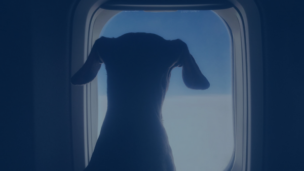 Pets In India Stranded During Pandemic Reunited By Private Jet