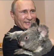 Vladimir Putin & koala