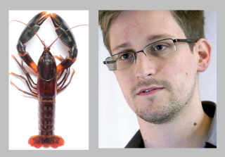 Cherax Snowden