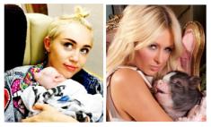 Miley Cryus & Paris Hilton with Pocket-Pigs!