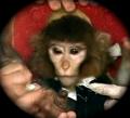 Iranian Space Monkey