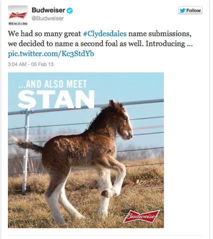 Clydesdale Foals Tweet More Than Hope in Super Bowl Naming Contest