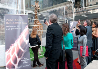 Hey Dude, Where's My Hotel? Residence Inn Recruits Giraffe From Wild Kingdom