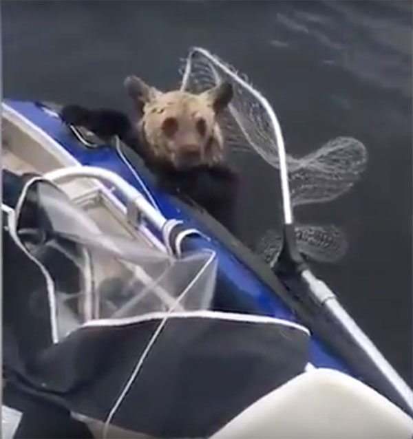 Baby bear clings to fishing boat in Russian lake