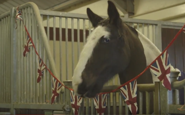 Horse from Blue Cross For Pets video
