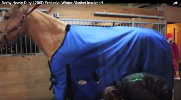 Derby Originals 1200D Turnout Blanket