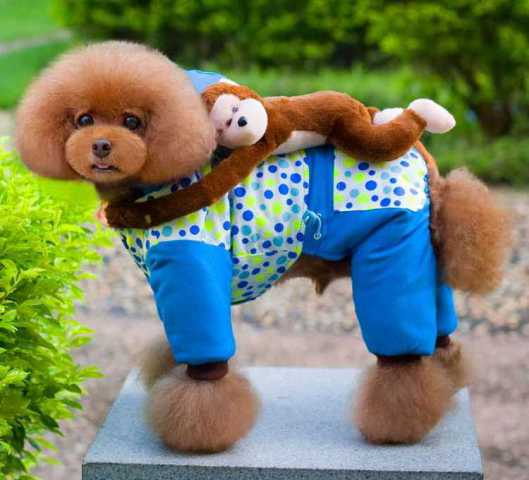 Winter Weather Onesie For Dogs Comes