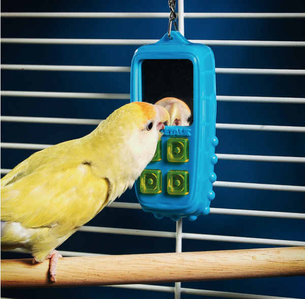 New Tech & Products For The Birds