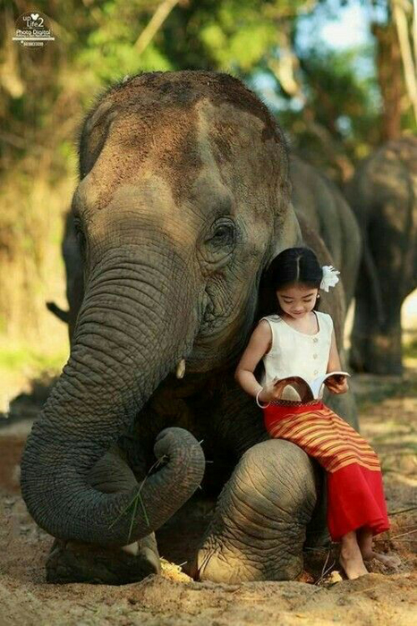 Child Reading With Elephant