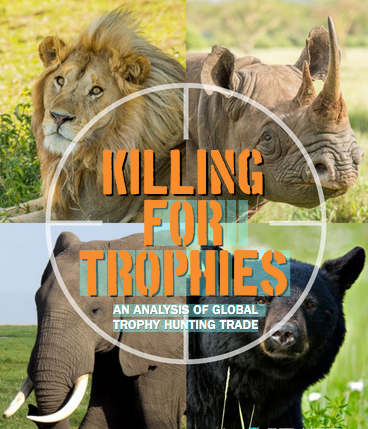 Trophy Hunting To Save Endangered Species Is A Counterintuitive