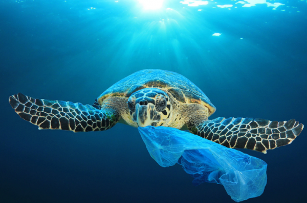Save Our Turtles. Stop Using Plastic. Recycle The Plastic.