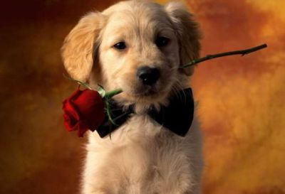 14 dogs that will totally melt your heart on valentine's day, Ideas