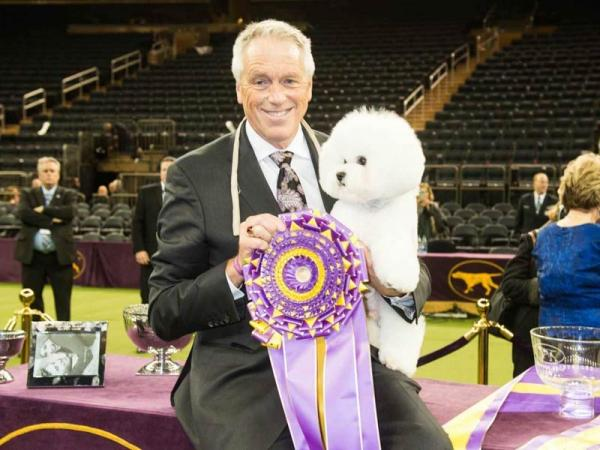 Flynn, a Bichon Frise, won the 2018 Westminster Kennel Club Dog Show