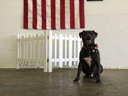 Malec the Service Dog