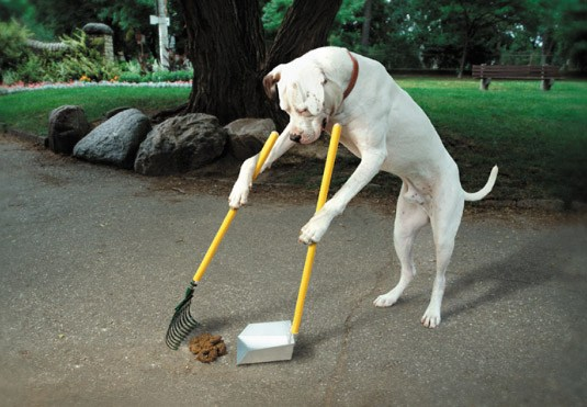 Train your dog to clean it instead of eating it