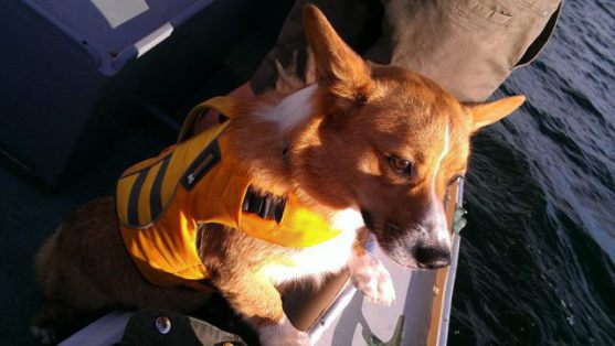 Winston wears his Ruffwear K-9 Float Coat while boating with family and friends on Puget Sound.
